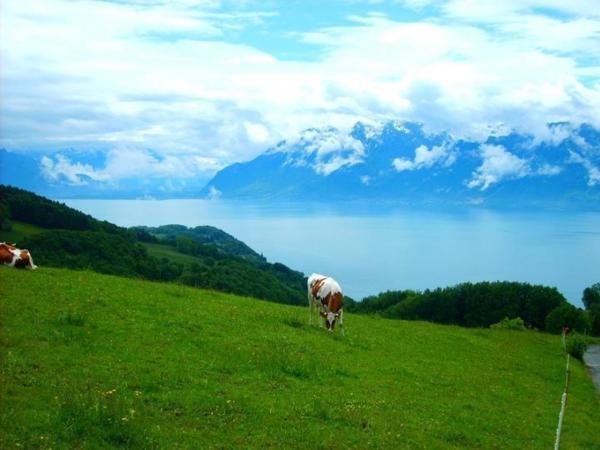 Le panorama exceptionnel de la Tour de Gourze sur les Alpes et le lac Léman